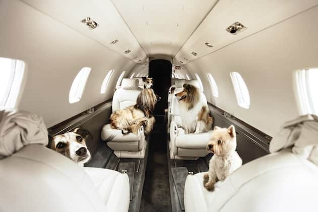 dogs-on-plane1