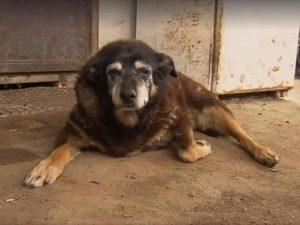 maggie-oldest-dogs-australia