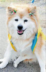 pusuke-oldest-dogs-asia